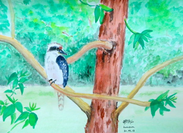 Kookaburra in the old Gum tree in Australia (笑翠鸟 古老橡胶树 澳大利亚), 2013